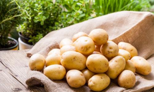 Как сохранить урожай до весны: правила хранения картофеля дома