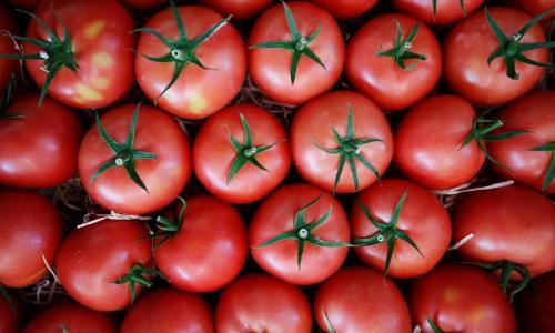 Чем полезны и вредны помидоры
