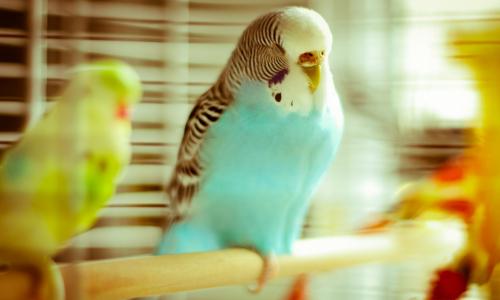 Мужчина получил 5 лет колонии за похищение клетки с попугаями